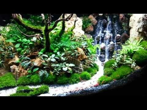 Pin oleh Sheryl Virgoe di Aquarium | Akuarium, Air terjun ...