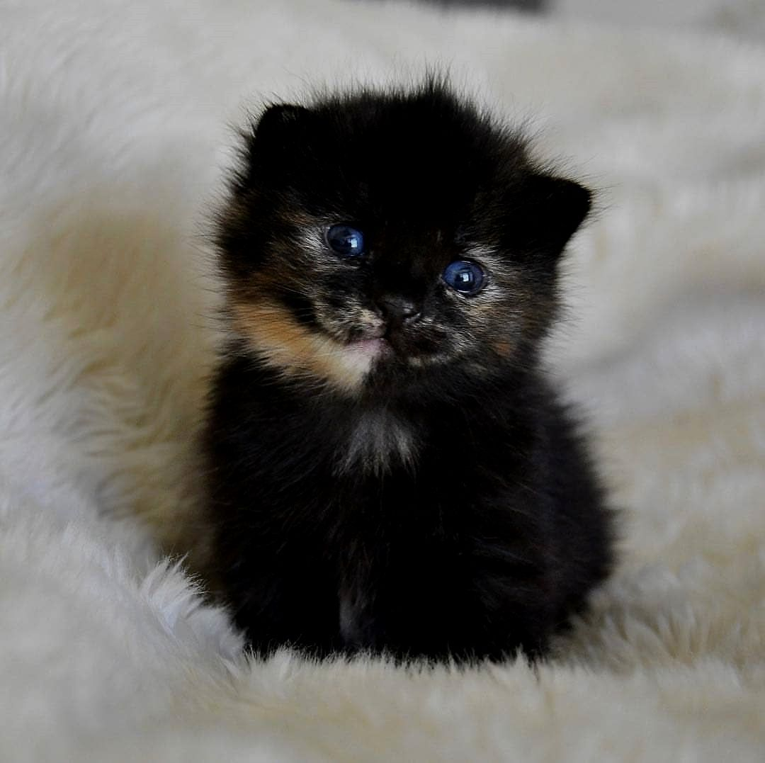 Kitten Feels So Much Love With Images Cute Cats Baby Cats Cute Baby Animals