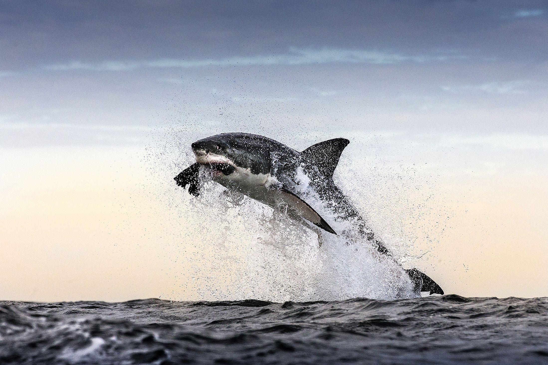 idee su shark eating seal su vita nell oceano 1000 idee su shark eating seal su vita nell oceano ani acquatici e balene