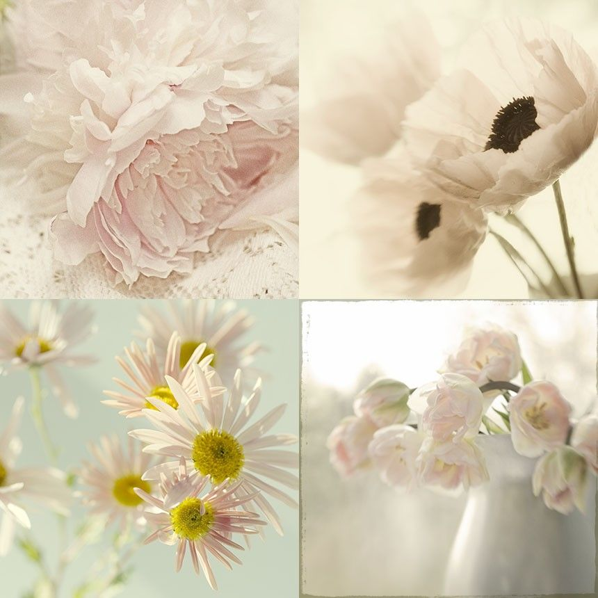 Flower Photographs, Four Floral Art Prints, Boho Decor, Shabby Chic Home,  French