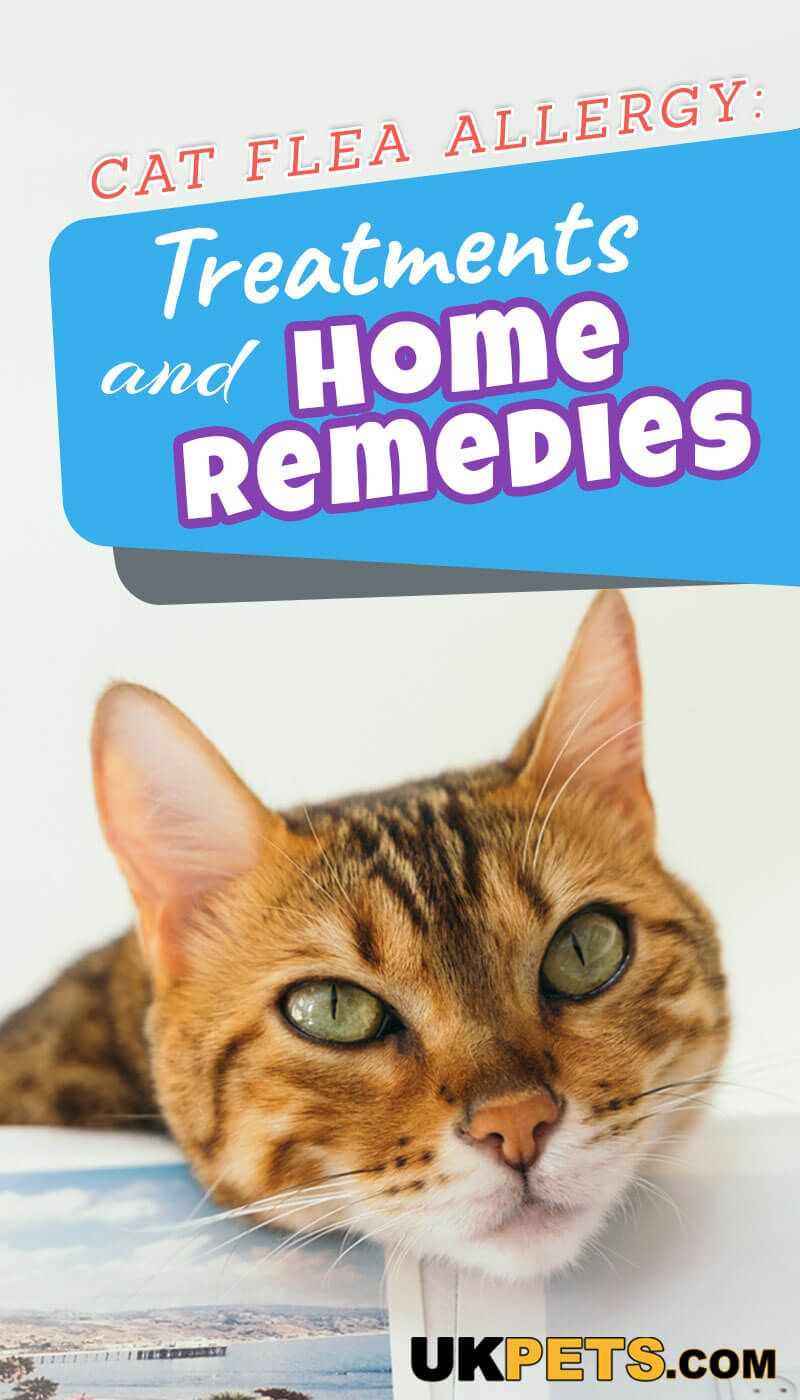 Cat Flea Allergy Treatments And Home Remedies Cat Fleas Cat Fleas Treatment Allergy Treatment