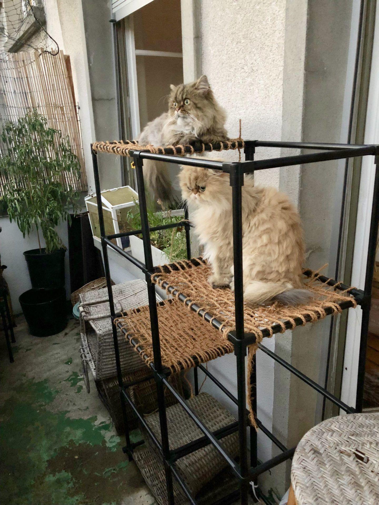 DIY Balcony Cat Tower   Diy cat tower, Outdoor cat tree ...