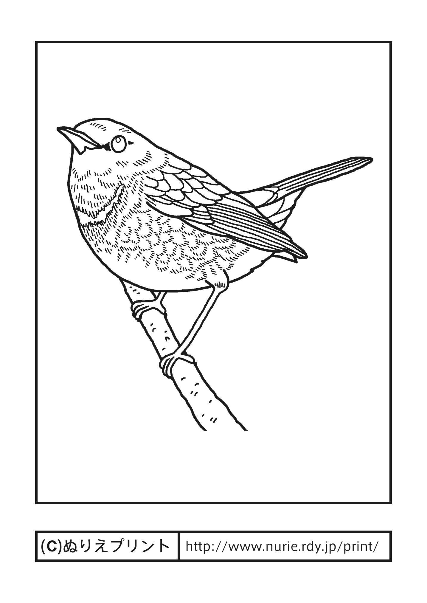 コマドリ駒鳥主線黒奈良県の鳥無料塗り絵都道府県ぬりえ