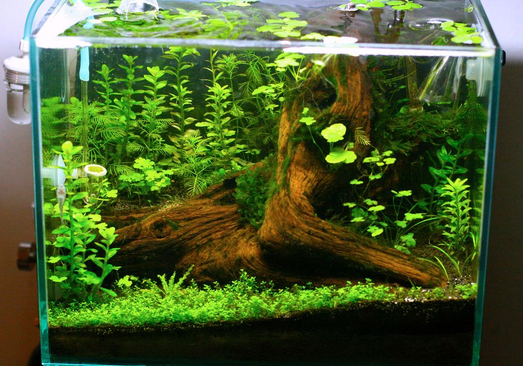 2 9 Gallon Fantasy Tree Stump Pics The Planted Tank Forum Fish Tank Plants Aquarium Fish Tank Nature Aquarium