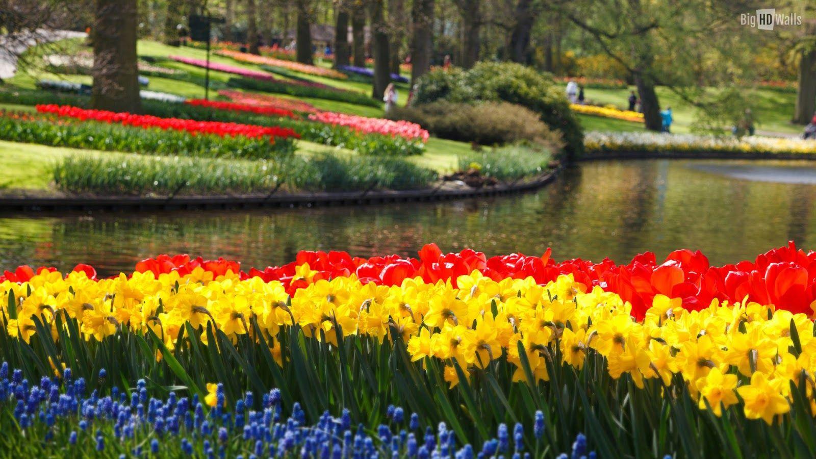 Aneka Gambar Bunga Tulip Yang Mengesankan Mata Pernik Dunia