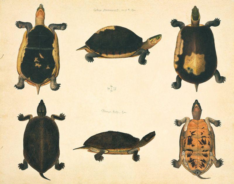 Turtles by John Reeves