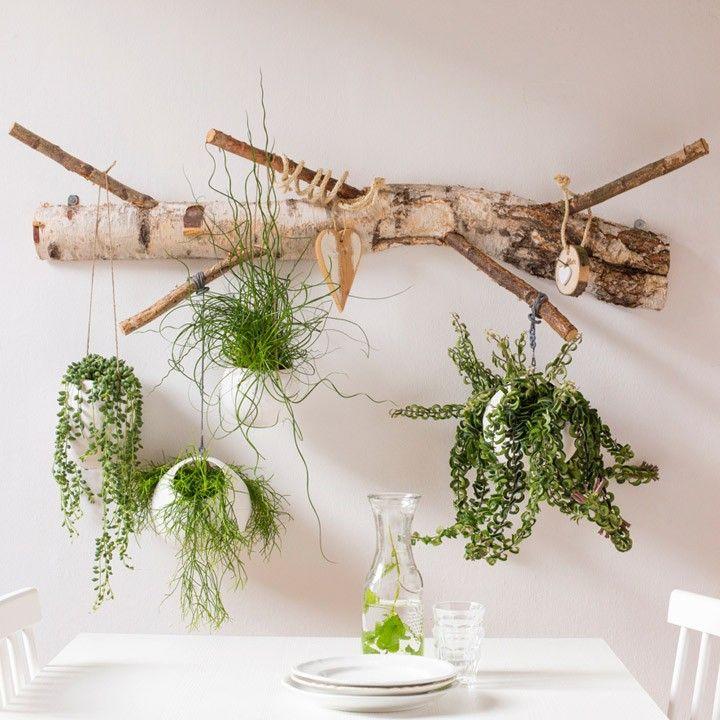 De mooiste hangplanten voor boven de tafel! #intratuin #groen #voorjaar #hangplanten
