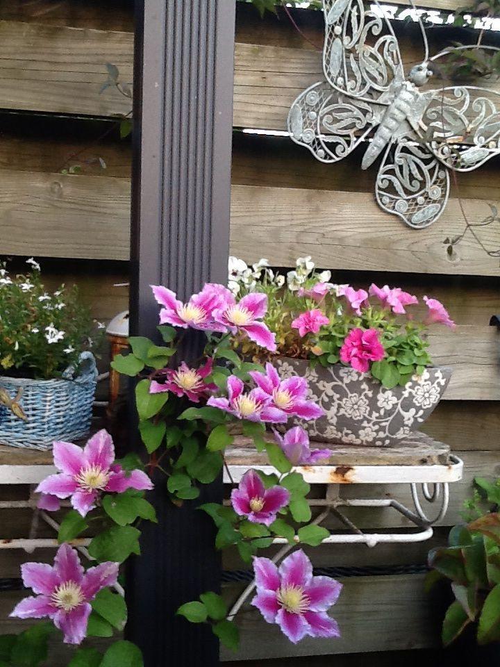 My gardenflowers