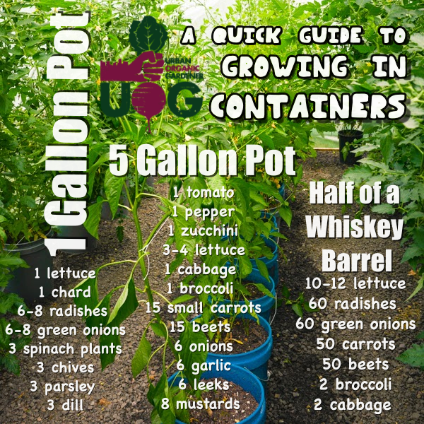 Photo of #additional #container #gardening #suitable #possible