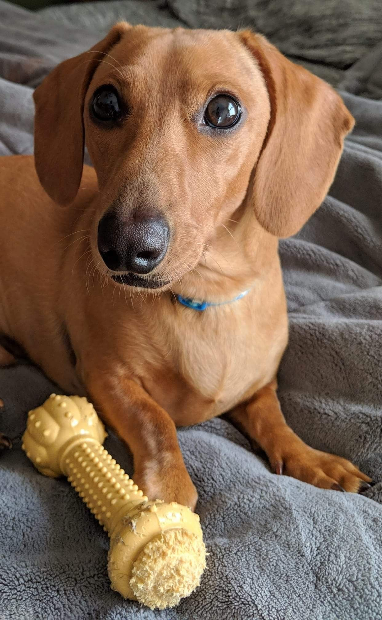 Pin by Doxaholics Anonymous on I Love Doxies! Baby