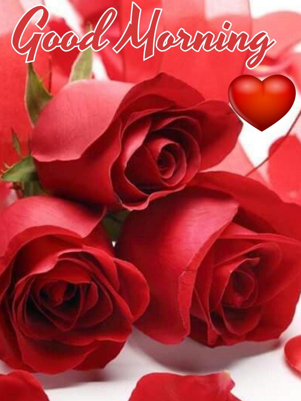 Pin By Josefine Fun On Good Morning Good Morning Roses Good Morning Rose Images Good Morning Beautiful Flowers Good morning red rose hd wallpaper gif