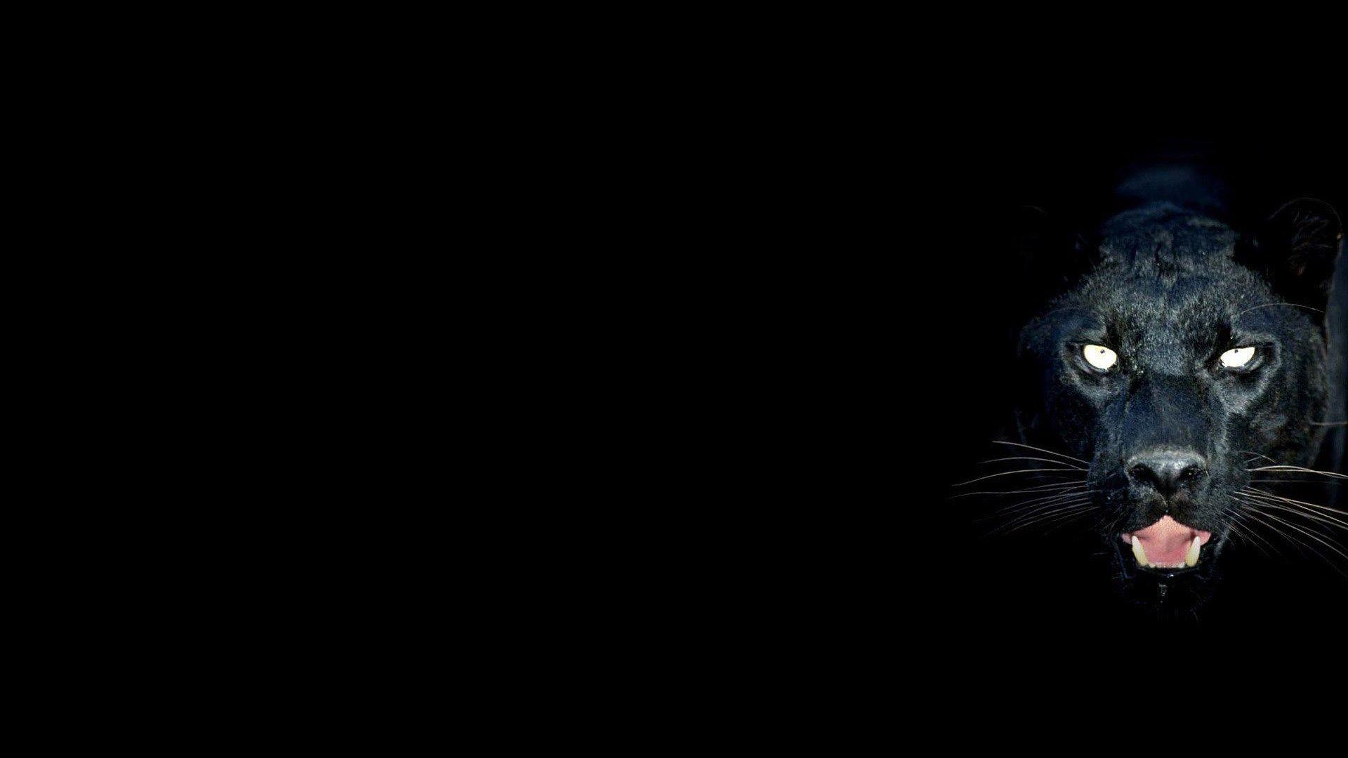 Black Background Animal Wallpaper Black Panther