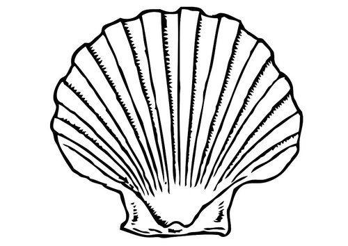 Concha de mar   Dibujos   Pinterest   Conchas y Dibujo
