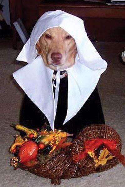 Dog wearing pilgrim costumes