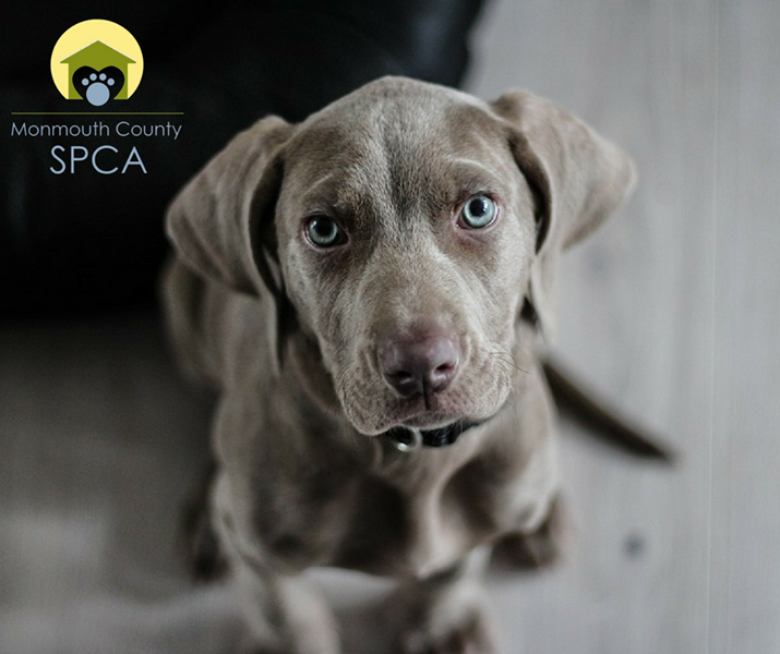 Check out the Monmouth County SPCA for some of the