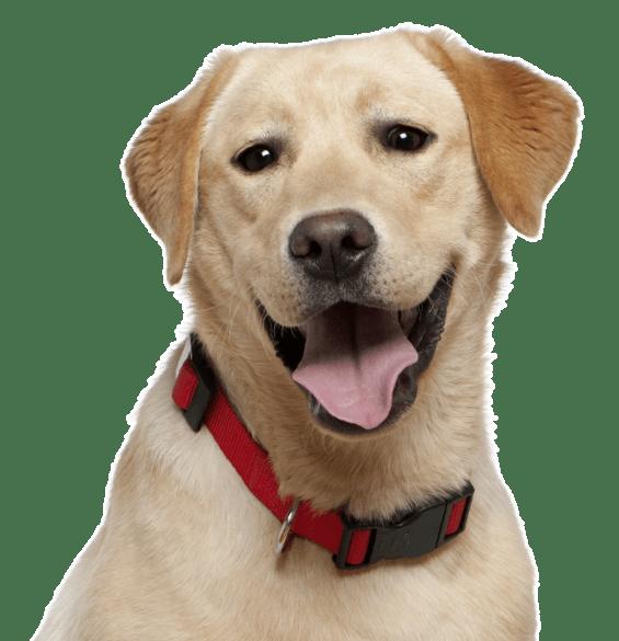 Craigslist Puppies For Adoption - Idalias Salon