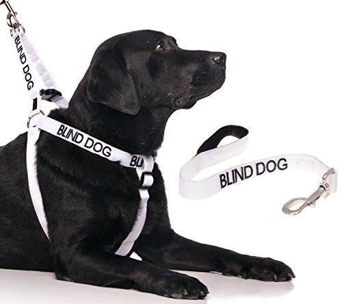 BLIND DOG White Color Coded Alert Warning LXL NonPull Dog