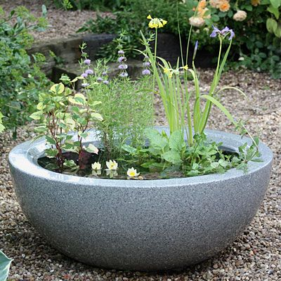 How Can I Make A Mini Pond In A Pot Plants And Gardens