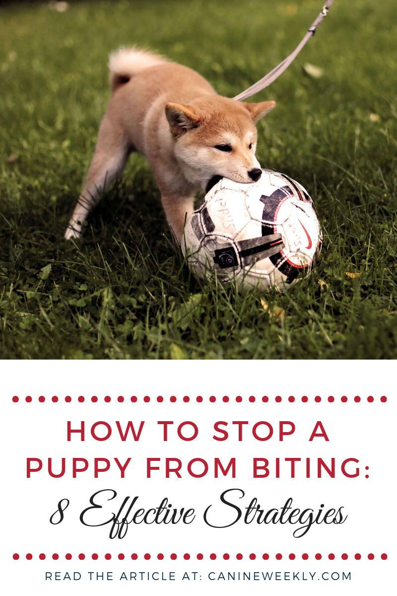 How to stop a puppy from biting 8 helpful strategies