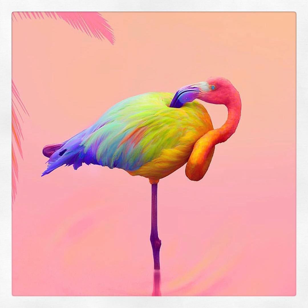 RAINBOW FLAMINGO By @space.ram | pink in 2019 | Colorful ...