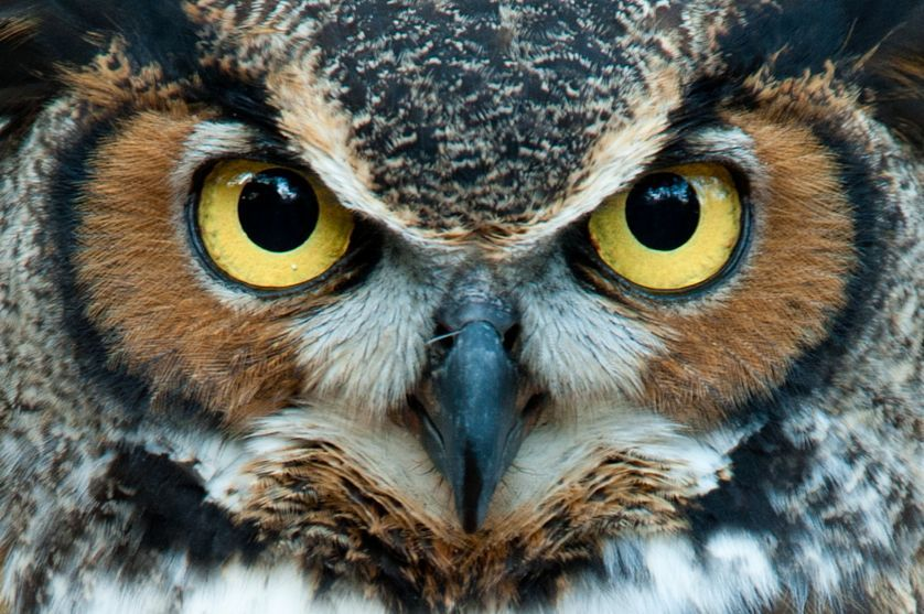 сайт с картинкой совы египтяне