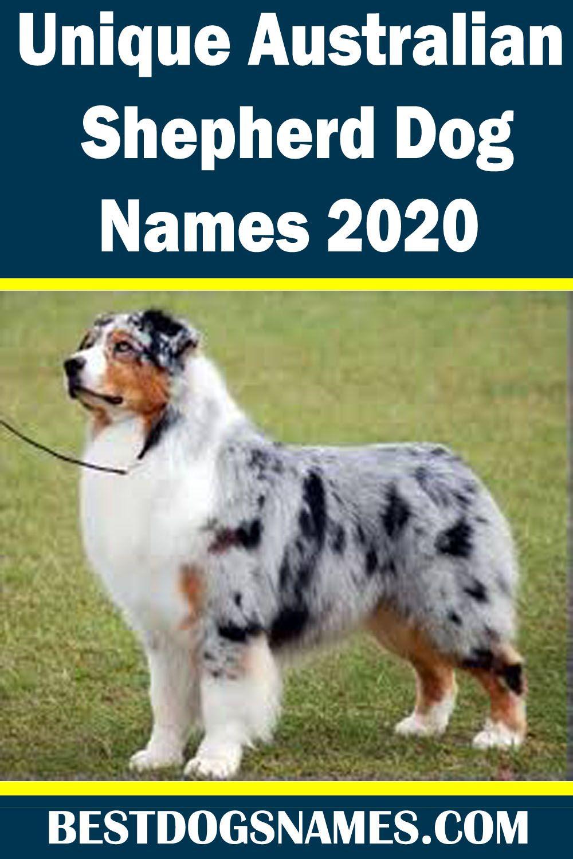 Unique Australian Shepherd Dog Names In 2020 Australian Shepherd