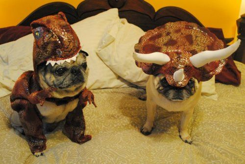 Rawr! Dino pugs!