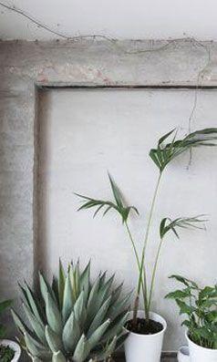Epingle Par Rove Concepts Sur Scandinavian Inspired Plante Verte