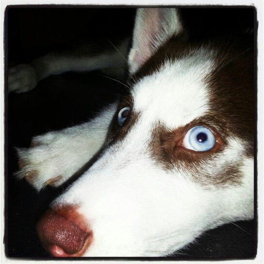 Blue eyes♥