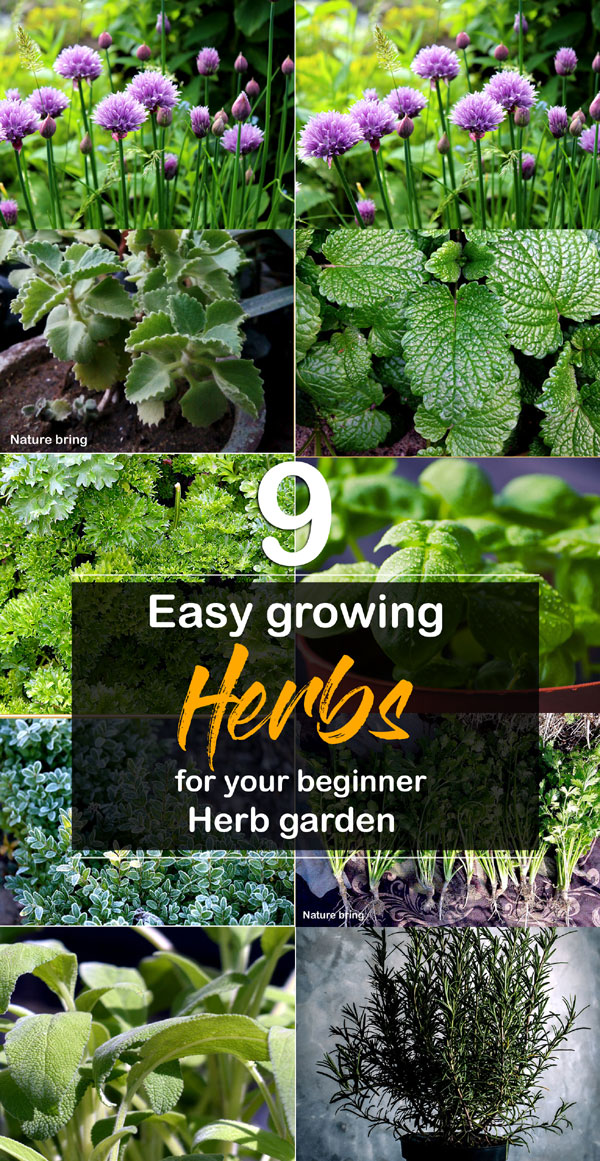 9 Easy Growing Herbs For Your Beginners Herb Garden With 400 x 300