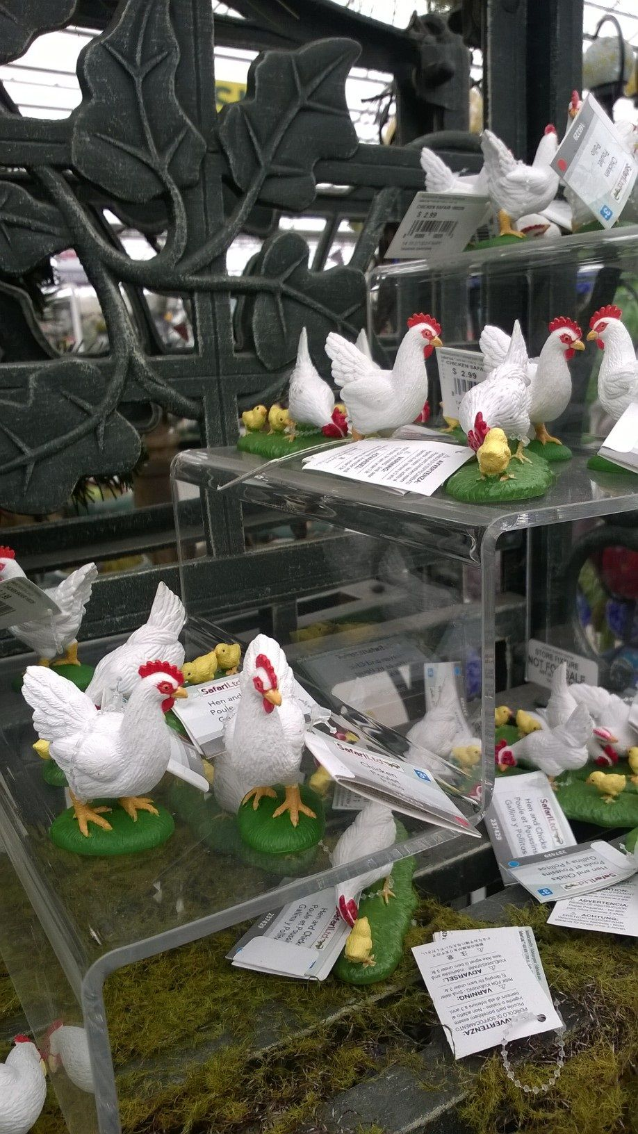 """""""bok, bok."""" nobody here but us chickens"""