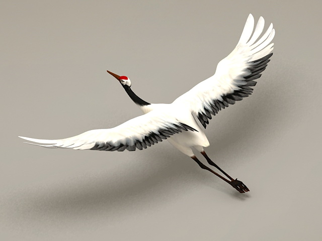 Crane Bird Flying Rigged 3d model 3ds Max files free