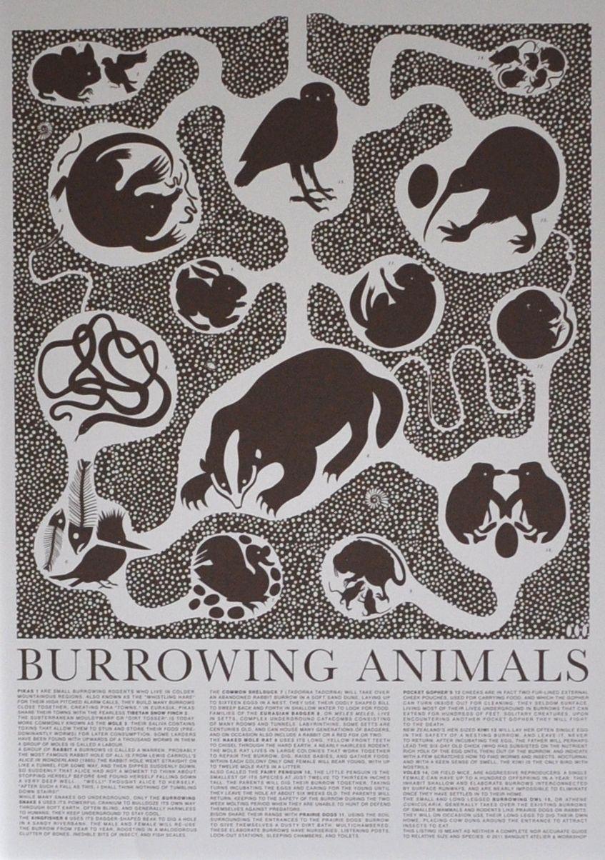 Burrowing Animals Animal Posters Animals Animal Print