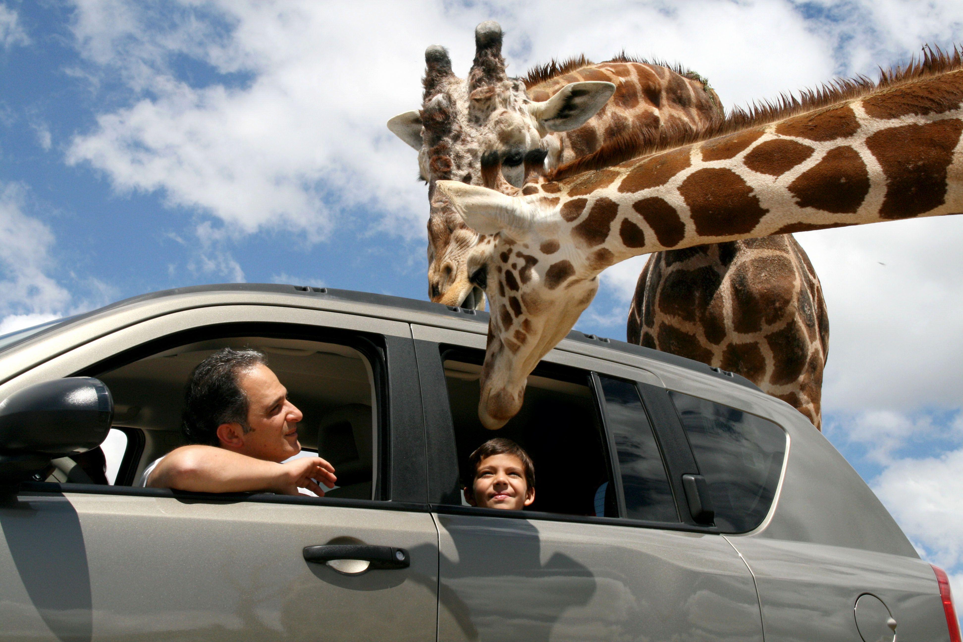 Africam Safari Puebla-México