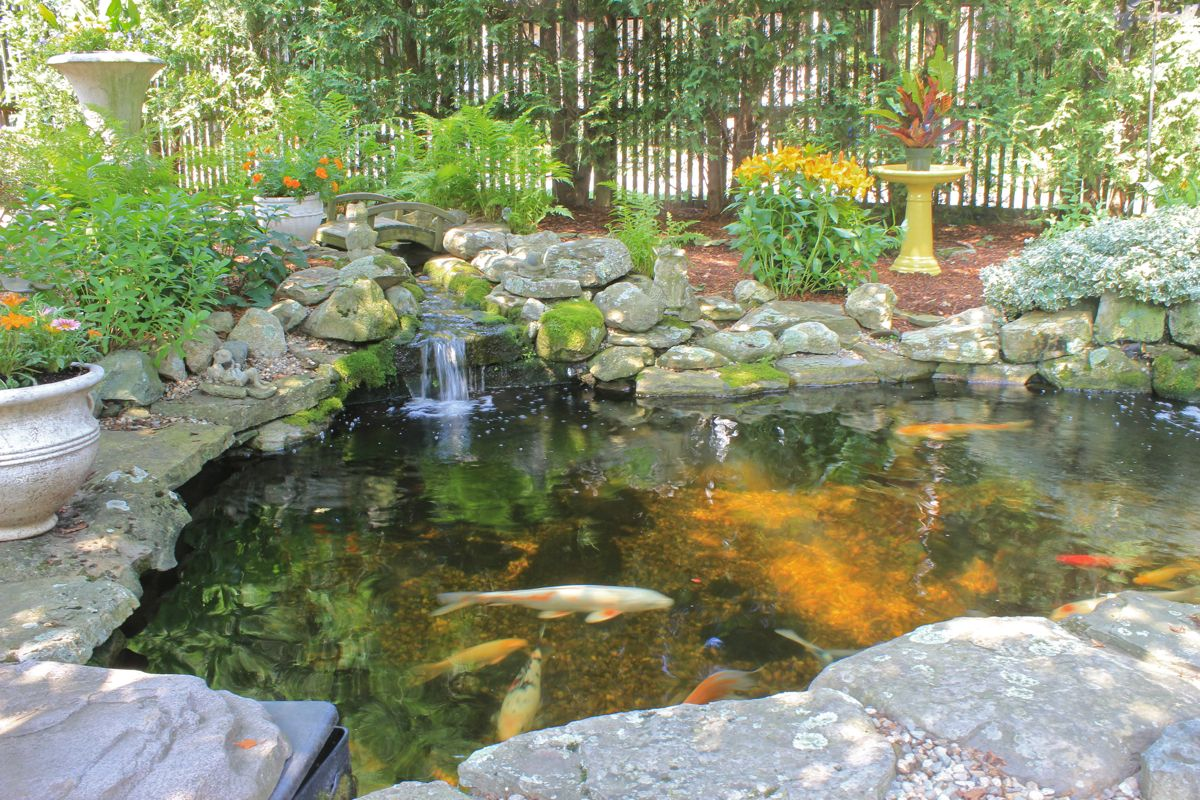 Backyard koi ponds and water gardens are a growing trend for Backyard pond plants and fish