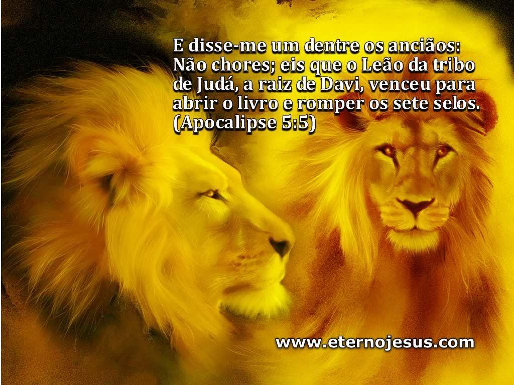 Papéis De Parede Leão Da Tribo De Judá Deus Animals