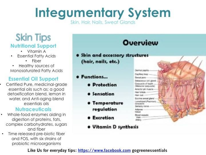 System #7: Integumentary System The skin is only a few millimeters ...