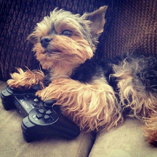 ¿Quieres jugar conmigo?