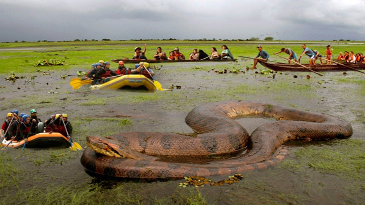 largest snake ever caught - photo #19
