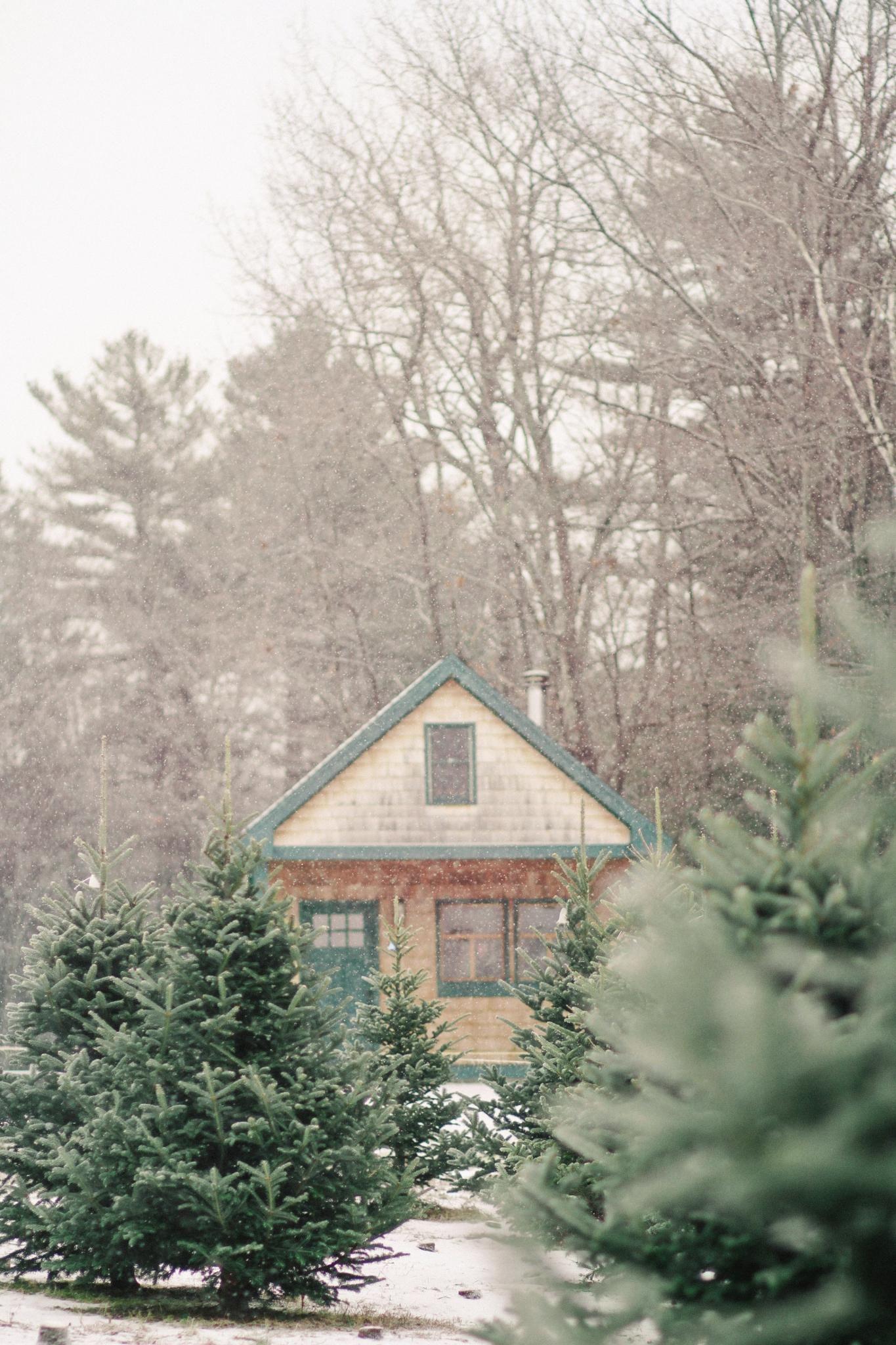 Shopper S Diary A Christmas Tree Farm In Maine Gardenista Christmas Tree Farm Tree Farms Real Christmas Tree