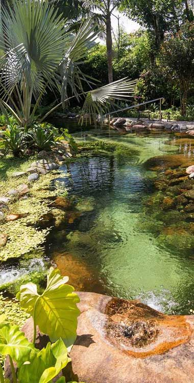 Eco Friendly Pool Design Ideas Life Retreat South Africa In 2020 Ponds Backyard Pond Landscaping Natural Pool