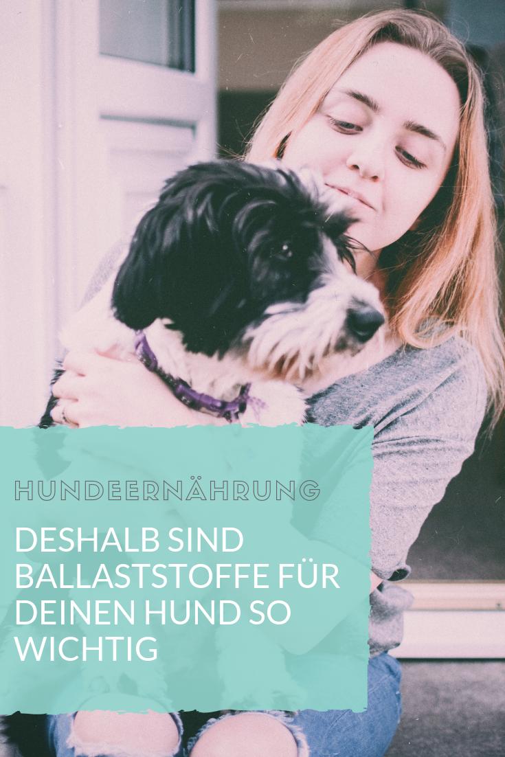 Wusstest Du Das Ballaststoffe Gesund Fur Deinen Hund Sind Und Die Darm Richtig Auf Vordermann Bringen Ich Erklare Dir In Meinem Tierarzt Hunde Gesunde Hunde