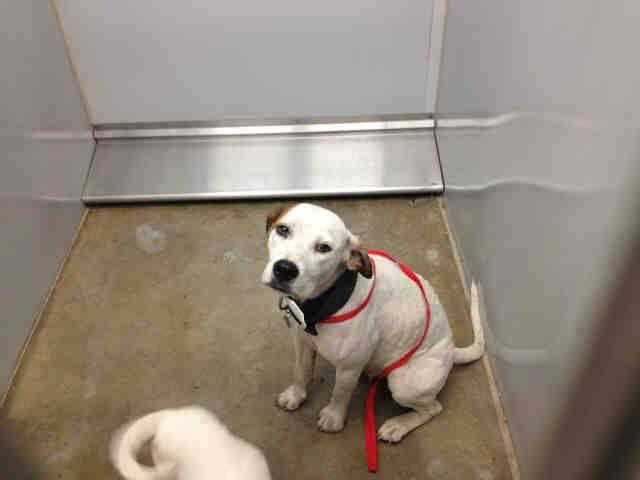 On The Euth List At Noon On Wed 10 9 13 60 Pledged To Rescue