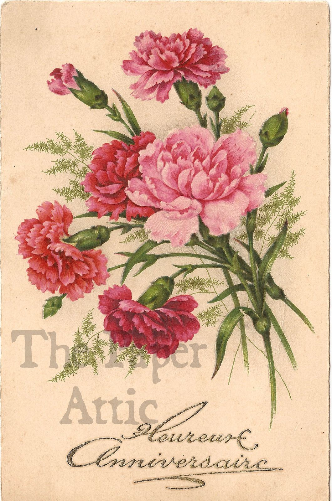 This is a picture of Adorable Pink Carnation Drawing