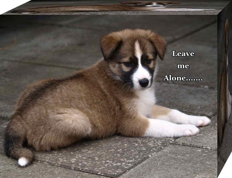 Leave me Alone  😘 😘  #WednesdayWisdom #WednesdayMotivation #DogOfTheDay #DogLover #DogLovers #DogLove #Puppy #PuppyLove #WednesdayThoughts #wednesday