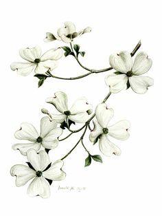 442a88ad7 redbud flower drawing - Google Search | tatts? | Dogwood flower ...