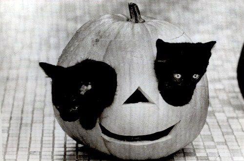 Pumpkittens :)