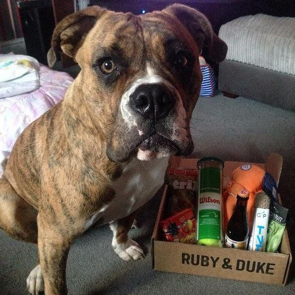 One of our many happy Ruby & Duke #Dukebox dog toy and treat customers @miss_moody2706. www.rubyandduke.com  #dogsofinstagram #dogstagram #dogs #dogsrule #doglove #doglovers #doglife #dogoftheday #doggy #doglover #doggie #dogscorner #dogofinstagram #dogsofinsta #dogwalk #dog_features #doggies #dogsandpals #dogloversofinstagram #dogdays #dogsofinstaworld #dogcrushdaily #dogslover