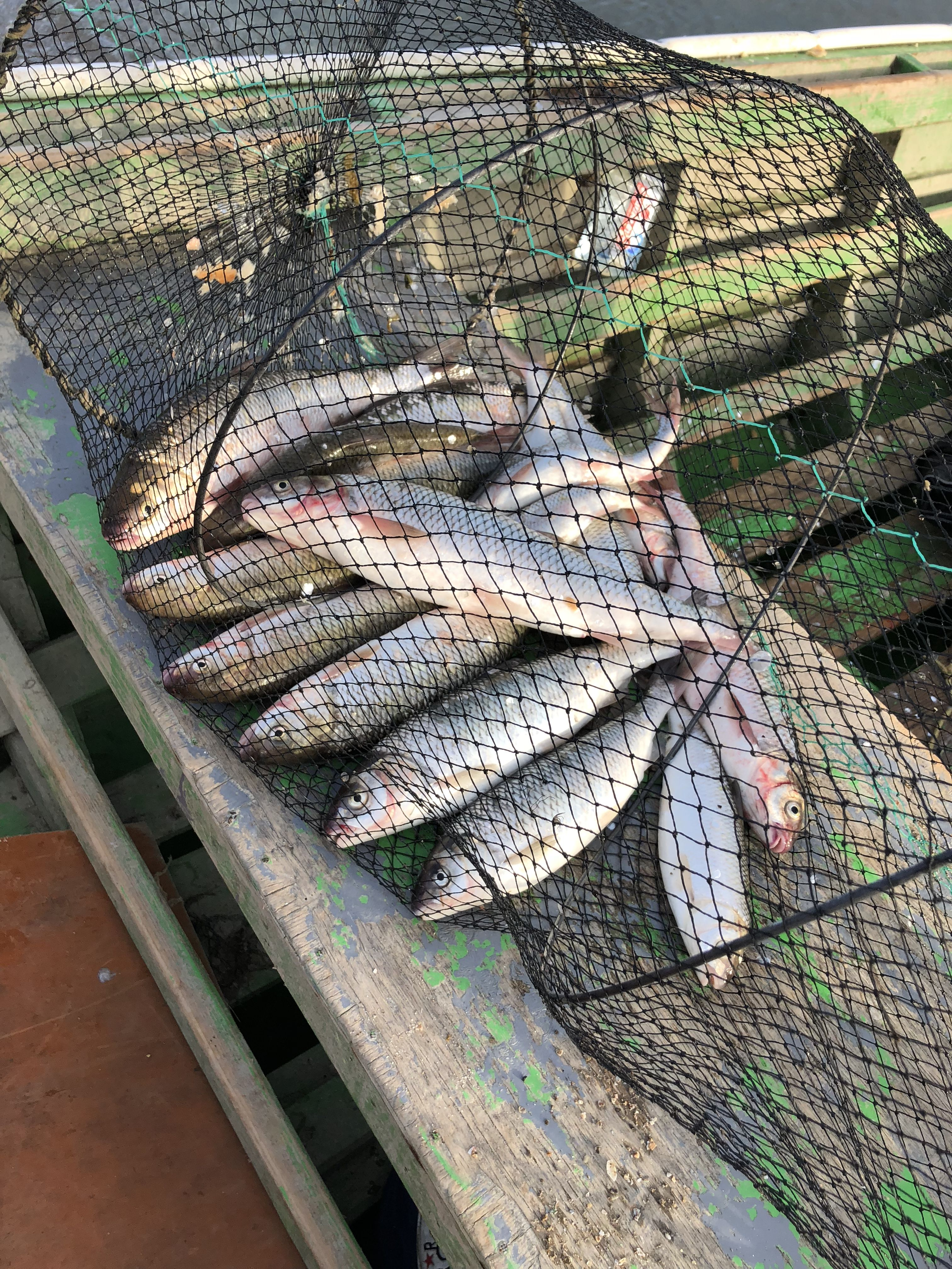 Pin by Amraliyev Elnur on Fishing | Fish, Meat, Food