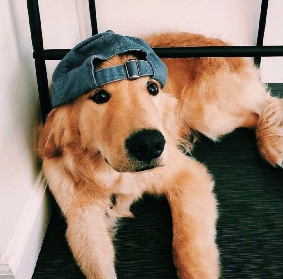Cute Golden Retriever Pinterest Caitmcelwee Puppies